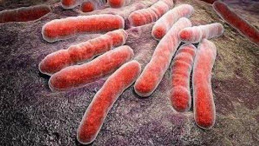Média anual de casos de tuberculose na Europa caiu 4,7%