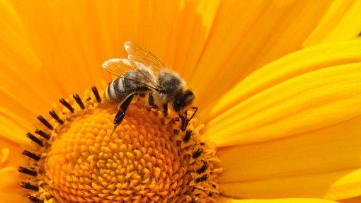 Junho começa com níveis muito elevados de pólenes no continente