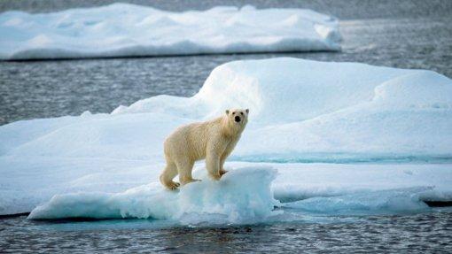 Clima: Organizações de saúde americanas pedem ação para resolver emergência