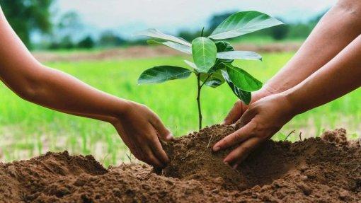 Portugal ajuda campanha de reflorestação no leste da Guiné-Bissau