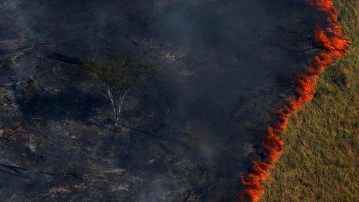 Amazónia é o bioma mais afetado pelos incêndios no Brasil