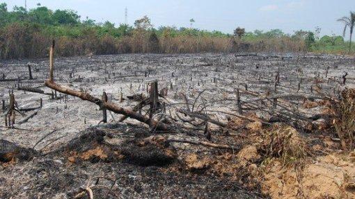 Ministro brasileiro diz que Governo rejeitará ajuda financeira do G7 para a Amazónia