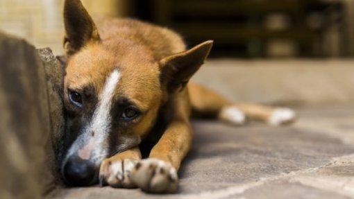 """Veterinários municipais alertam para números """"absurdos"""" de animais abandonados"""