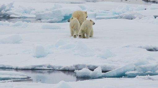 Investigadores da UPorto em expedição no Ártico para estudar mudanças em ecossistemas