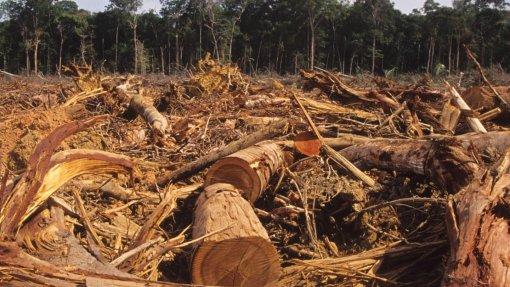 Ex-diretor de órgão que monitoriza desflorestação no Brasil diz que danos podem ser irreversíveis