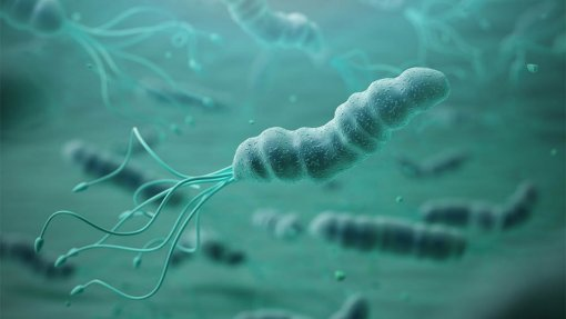 Resistência a antibiótico contra bactéria do estômago 'H. pylori' duplica na Europa