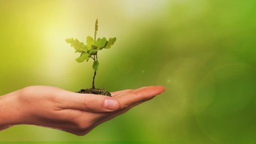 Voluntários vão plantar mil árvores na serra da Estrela