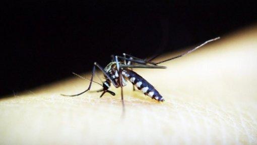 OMS testa esterilização de mosquitos para combater dengue, Zika e malária