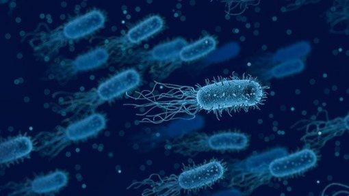 Bactéria multirresistente que provoca doenças respiratórias mata cada vez mais
