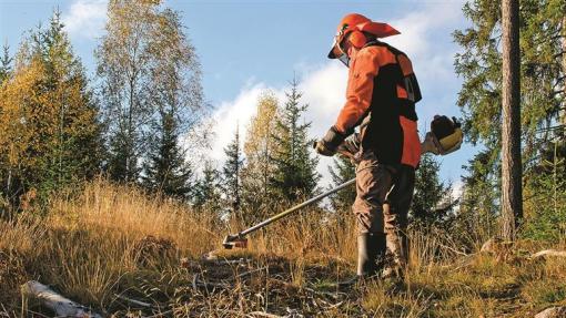 Incêndios: GNR começa a fiscalizar incumprimentos na limpeza da floresta e a aplicar coimas