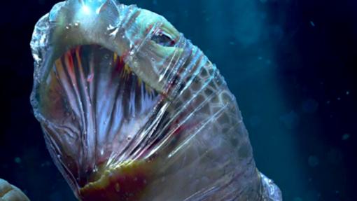 Organização SOS Animal lança campanha de proteção dos oceanos