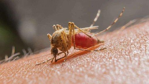 Cientistas alteraram genes de um mosquito para disseminar genes antimaláricos