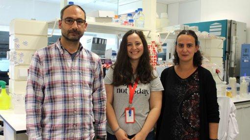 Cientistas de Coimbra descobrem novo mecanismo da infeção pela bactéria Salmonella