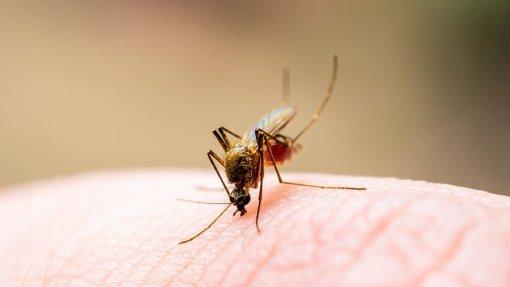 Recivalongo nega relação entre insetos e operação de aterro em Valongo