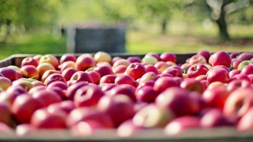 Projeto Mobfood quer responder aos desafios do agroalimentar e tornar setor sustentável